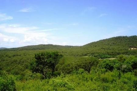 Lush landscape views